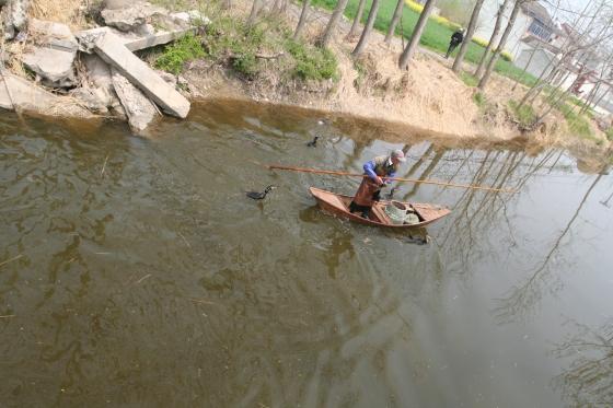 A fisherman using cormorants to catch his livelihood