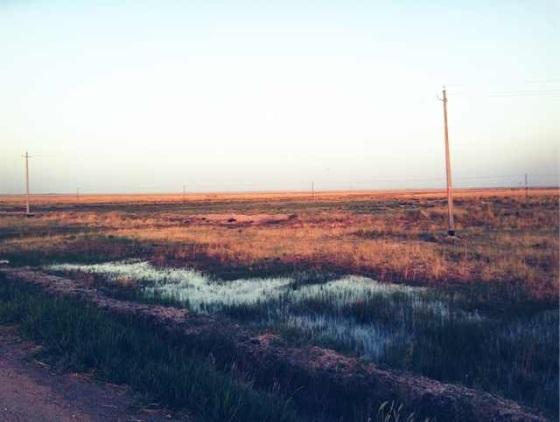 Swamp in desert