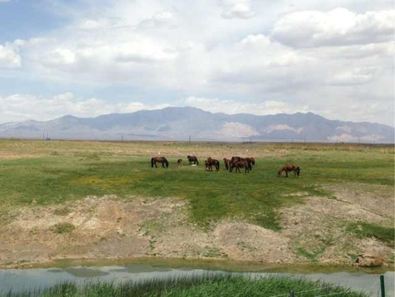 After a long and heated debate, the horses of Xinjiang have decided to join the cause and sign our petition to the Wind God