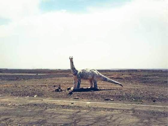 Danger: wild animals crossing